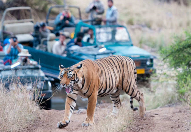 Golden-triangle-with-Ranthambore