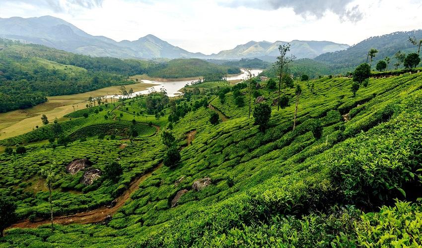 Kerala_Munnar-India