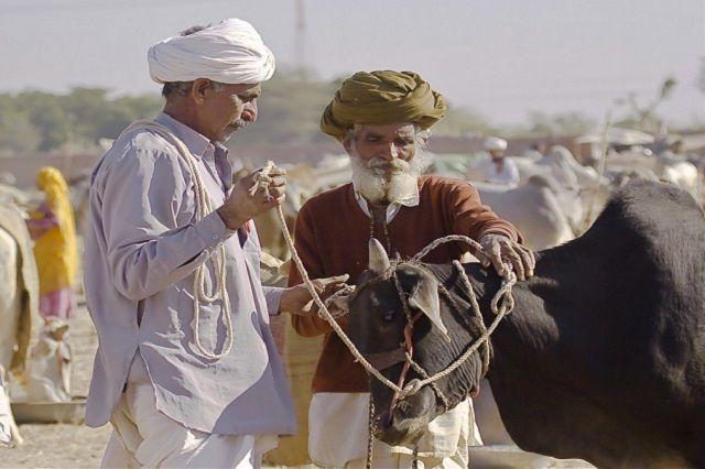 Nagaur Cattle Fair in Jodhpur