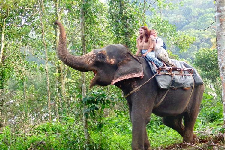 elephant-ride-kerala