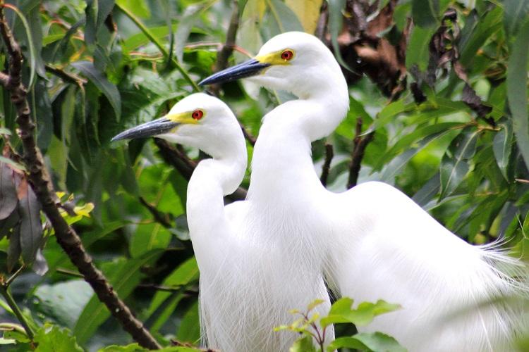 bird-watching-kerala