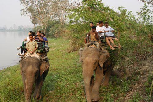 Kaziranga National Park Elephant Safari
