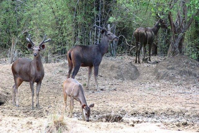 Chail Wildlife Sanctury