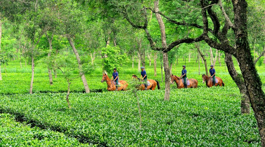 Tea Tourism in Assam
