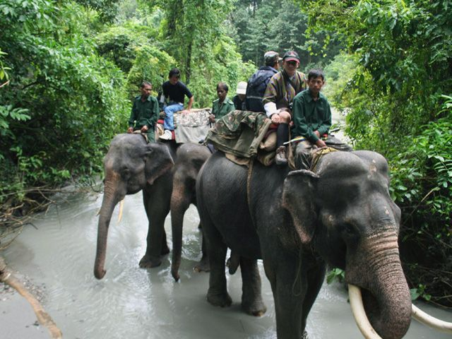 Elephant Safari at Manas National Park
