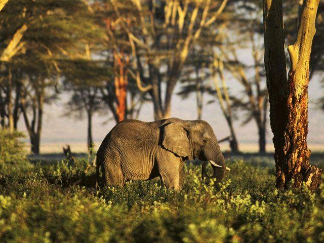 Gumti wildlife Sanctuary