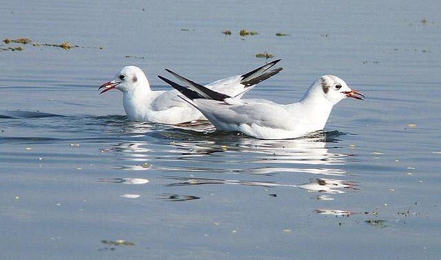 Nalsarovar- Bird- Sanctuary- Gujarat