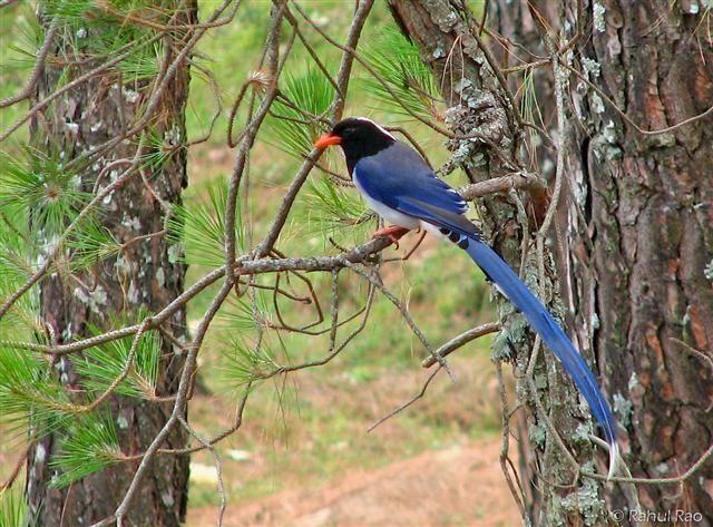 bird at corbett national park