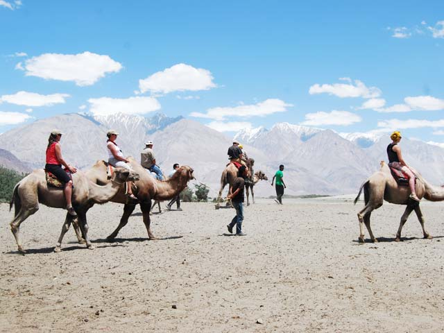 Camel-Safari-in-Leh-Ladakh