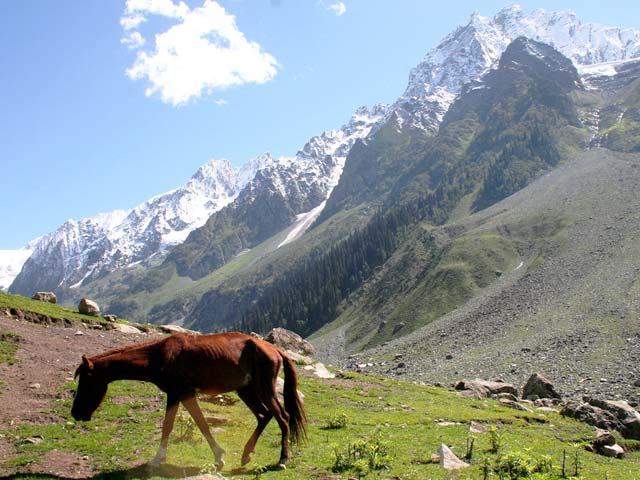 Thajiwas-glaciar-Sonamarg