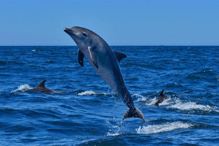 Dolphin-Ride-Goa