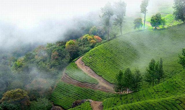 Munnar-hills