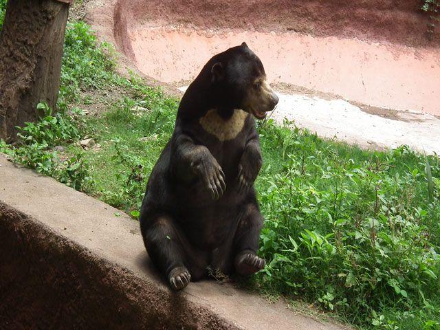 Nehru Zoological Park in Hyderabad