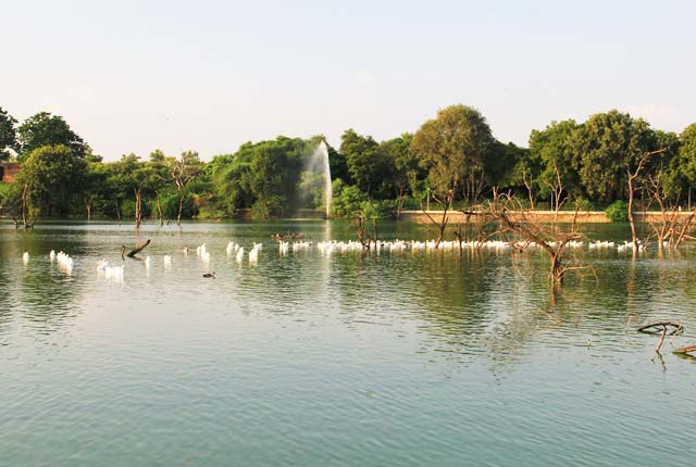 Sultanpur Lake, Gurgaon