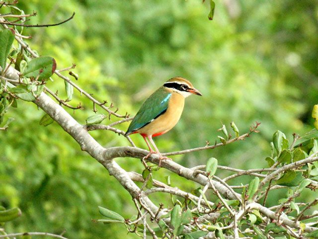 BirdPhotography in Sri Lanka