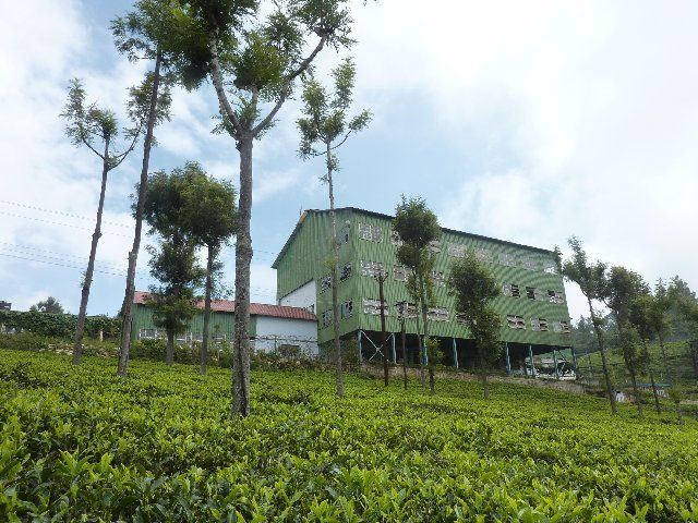 High field tea factory Coonoor