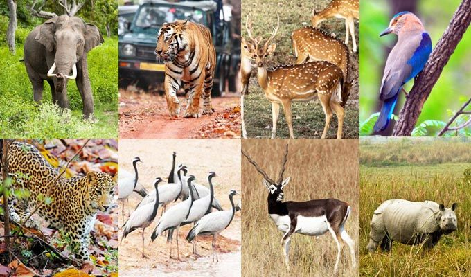 2019 Opening Dates of National Parks in India