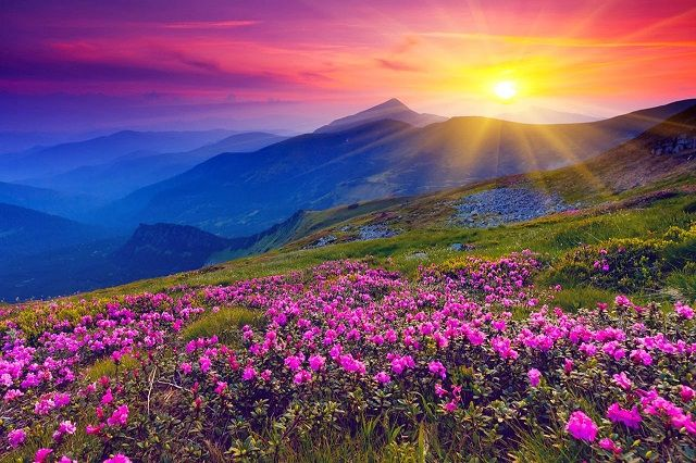 Valley of Flowers  - A vibrant and splendid national park