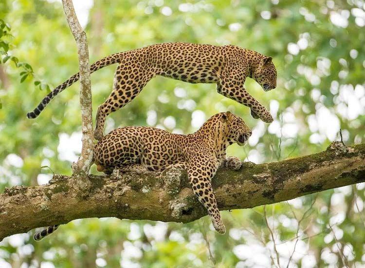 Kabini Wildlife Sanctuary, Mysore,