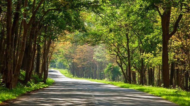 The Bandipur Forest route to Bangalore is one of the most beautiful trips through forests in India