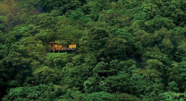 Vythiri Tree House Resort