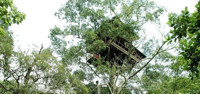Green Magic Tree House Resort