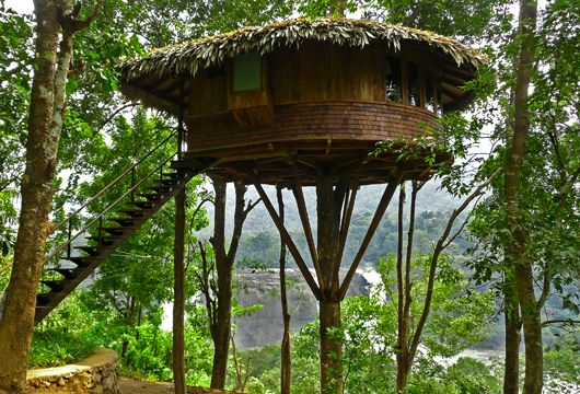 Rain Forest Resort