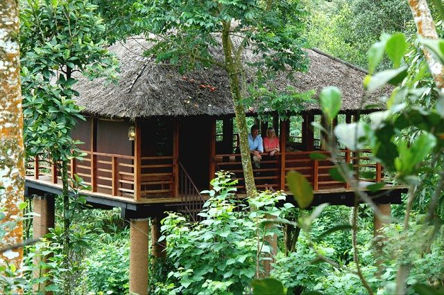 Shola Periyar Tree House Resorts