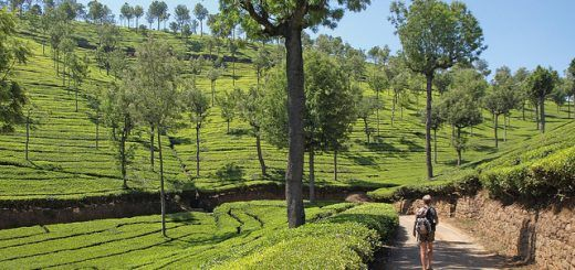 Top Places to Visit in India in May