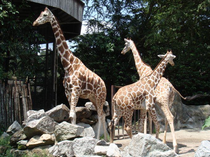 Kuala Lumpur National Zoo in Malaysia