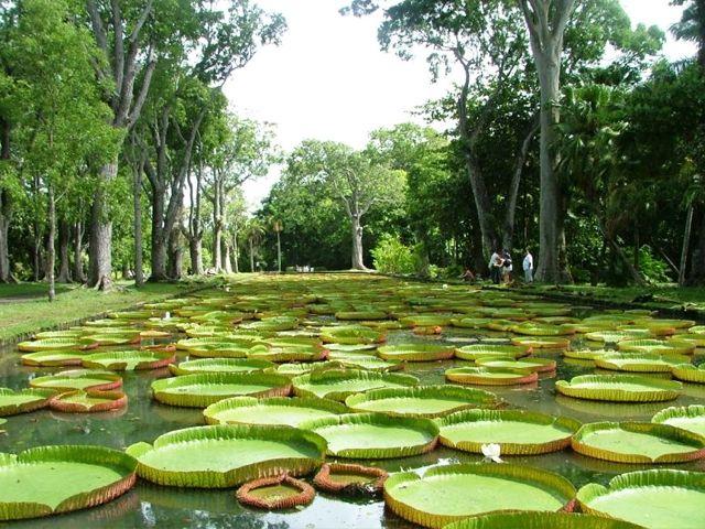 botanical-garden-of-Pamplemousses