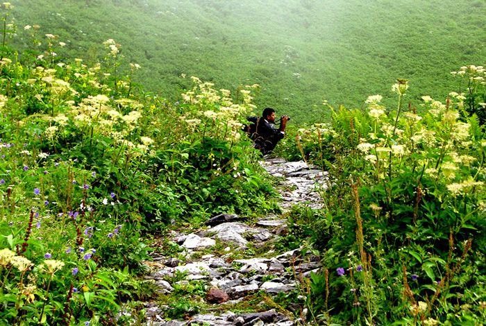 valley-of-flower-uk