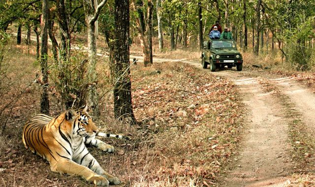 Aboard Tiger Express; Embark on the Wildlife Journeys from June