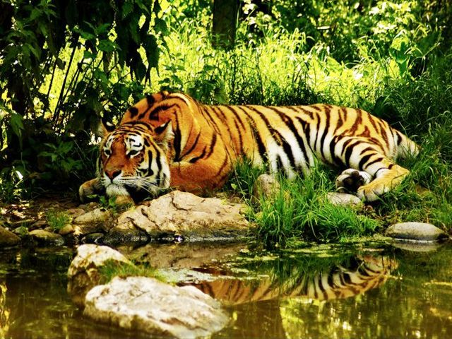Pushpagiri Wildlife Sanctuary