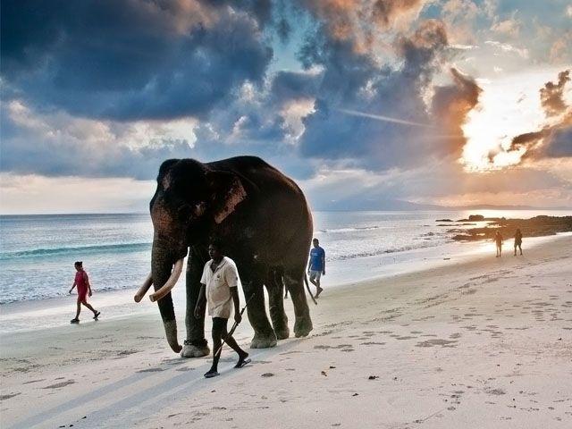 elephant-beach-havelock-island-andaman