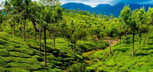 Top 10 Tourist Places in Kerala