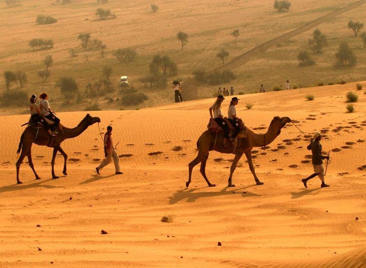 Wildlife-Safari-at-Desert-park