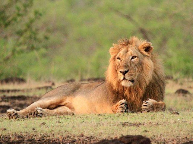 Gir National Park in Gujarat: places to visit in gujarat