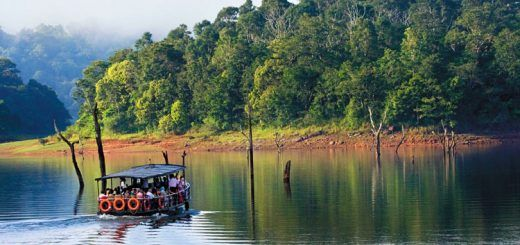 How to Plan Your Trip to Periyar National Park: A Comprehensive Guide