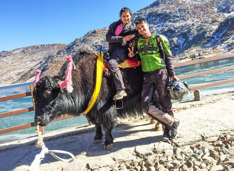 yak ride in sikkim
