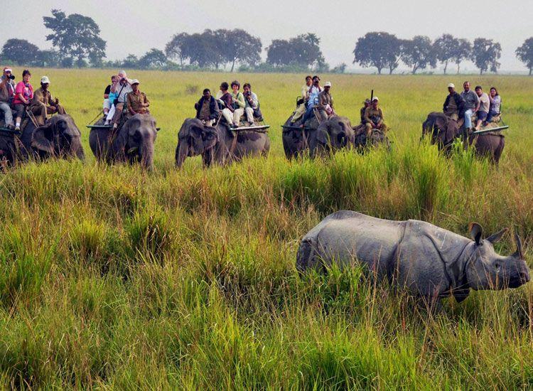 Manas National Park in Assam
