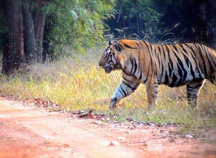 7 Splendid National Parks of Madhya Pradesh