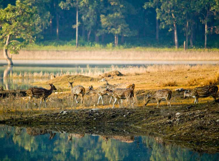 7 Splendid National Parks of Madhya Pradesh
