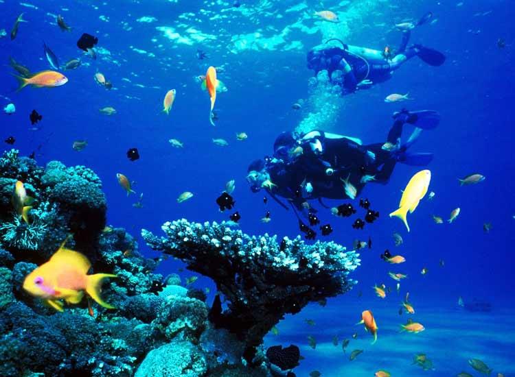 Scuba Diving in pondicherr