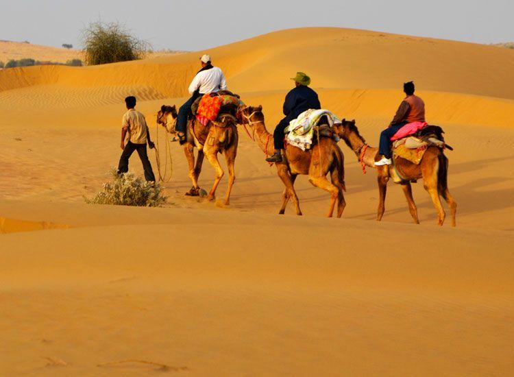 Camel Safari in Rajasthan