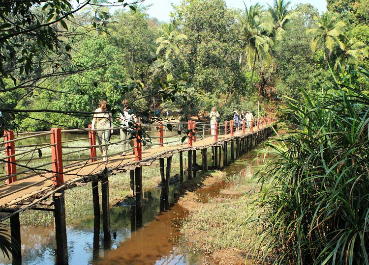 Savoi Plantations in North Goa