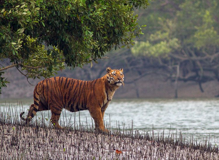 sundarban national park,