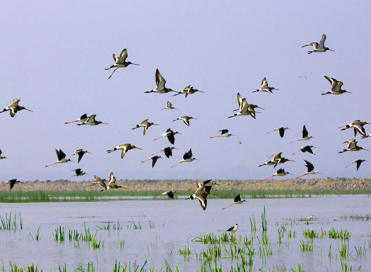 Top 15 Bird Sanctuaries in India for Bird Lovers