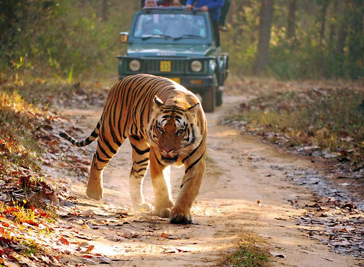 kanha-jeep-safari