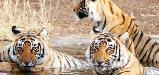 Bengal – The Emerging Name in The Tourism Sector